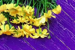 Ciemny purpurowy drewniany tło z bukietem żółte stokrotki na deskach Obrazy Stock