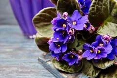 Ciemny purpurowy fiołka kwiat Zdjęcia Royalty Free
