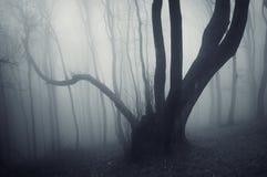 Ciemny straszny tajemniczy przerażający ciemny drzewo w ciemnym tajemniczym lesie z mgłą Obraz Stock