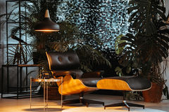 Ciemny studio z roślinami obraz stock