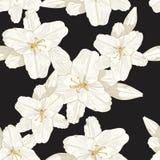 Ciemny tło w ręki rysować kreskowych nakreślenie lelujach kwitnie bezszwowego wzór royalty ilustracja