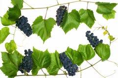 ciemny winogron Obraz Royalty Free