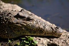 Cienaga de Zapata crocodile farm. Stock Image