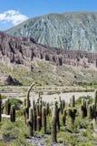 Cienaga, Quebrada de Humahuaca, Jujuy, Аргентина. Стоковое Изображение RF