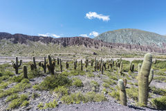 Cienaga, Quebrada de Humahuaca, Jujuy, Argentina Fotografia Stock Libera da Diritti