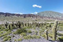 Cienaga, Quebrada de Humahuaca, Jujuy, la Argentina Foto de archivo libre de regalías