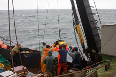 ciencia Biología del mar Quite el gancho agarrador de Petersen (dechado inferior) de profundidades del Pac Foto de archivo