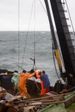 ciencia Biología del mar Quite el gancho agarrador de Petersen (dechado inferior) del dep Imágenes de archivo libres de regalías