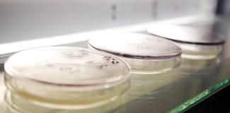 Ciencia de la microbiología Foto de archivo libre de regalías