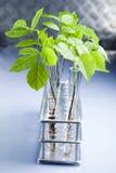 Ciencia floral en laboratorio azul Imagenes de archivo