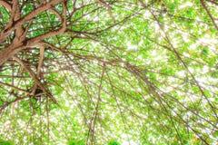 Cieni liście pod drzewem Zdjęcie Stock