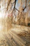 cienia śnieg Obraz Stock