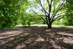 cienia drzewo Zdjęcia Stock
