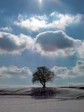 Cienia drzewo 2 zdjęcie royalty free