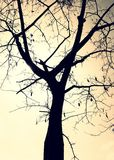 Cienia drzewo Fotografia Royalty Free