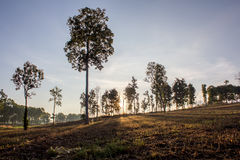 Cienia drzewo na słońca Ustalonym tle Zdjęcia Royalty Free