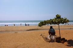 cienia plażowy drzewo Fotografia Royalty Free