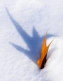 Cienia Pożyczkowy liść w śniegu Fotografia Royalty Free