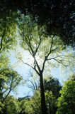 cienia słońce Zdjęcia Stock