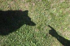 cienie zdjęcie royalty free
