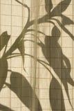 cienie Obrazy Stock