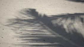 Cienie drzewek palmowych fronds trzepocze na textured piasek plaży morze karaibskie Riviera majowie Mexico zbiory wideo