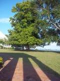 Cienie drzewem zdjęcia royalty free