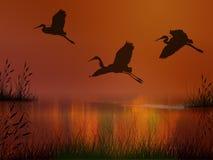 cienie latać Obrazy Royalty Free