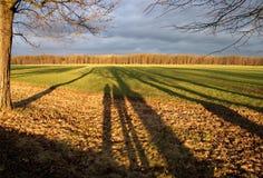 Cienie w polu Zdjęcie Royalty Free