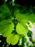 Cienie zieleń Zdjęcia Stock