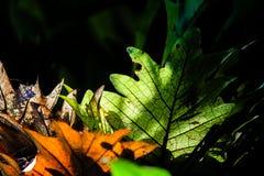 Cienie zieleń Zdjęcie Royalty Free