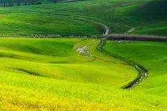 Cienie zieleń Zdjęcie Stock