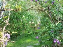 Cienie zielone purpury i brąz zdjęcia royalty free