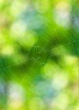 Cienka czarna pajęczyna zdjęcia stock