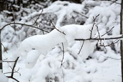 Cienka gałązka pod puszystym śniegiem Fotografia Royalty Free