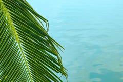 Cienka palmy gałąź na tle morze obraz royalty free