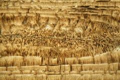 Cienka sekcja Nummulite wapień pod mikroskopem Obrazy Stock