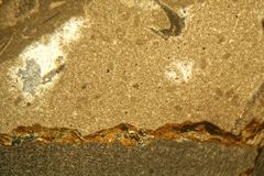 Cienka sekcja Triasowy węglan pod mikroskopem Zdjęcie Royalty Free