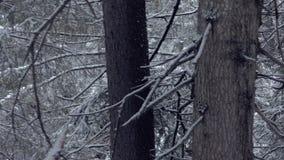 Cienki runlet spływanie między górkowatymi bankami zakrywającymi z śnieżnymi sosnami w mo zbiory