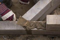 Ścienna budowa - 04 Zdjęcia Stock