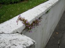 Ścienni kwiaty Obraz Stock