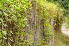 Ścienny drzewo Fotografia Royalty Free