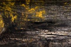 ścienny grunge drewno Fotografia Royalty Free