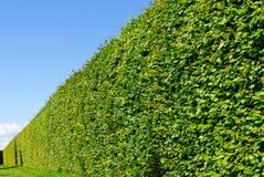 Ścienny labirynt zielony krzak Zdjęcie Royalty Free