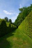 Ścienny labirynt zielony krzak w Burgundy Obraz Stock
