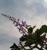 Ścienny papier kwiat obraz royalty free