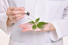 Científico con el cuidado de piel natural del aceite, orgánico herbario verde fotos de archivo