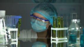 Científico de la ecología que mira el tubo con la muestra de la planta verde, biología orgánica almacen de video