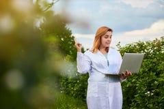 Científico de la mujer que trabaja en jardín de la fruta El inspector del biólogo examina arbustos de zarzamora usando el ordenad fotografía de archivo libre de regalías