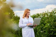 Científico de la mujer que trabaja en jardín de la fruta El inspector del biólogo examina arbustos de zarzamora usando el ordenad fotos de archivo libres de regalías